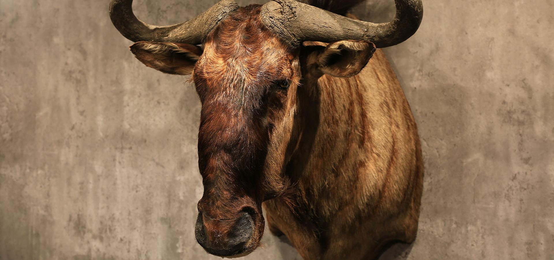 鴕鹿-麋鹿