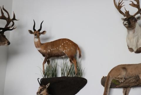 美國獵人收藏品6