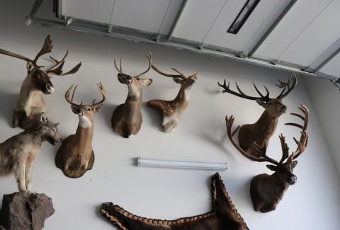 美國獵人收藏品2