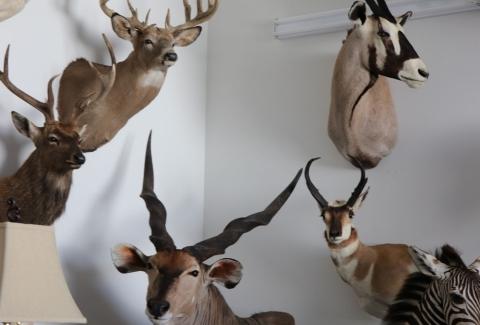 美國獵人收藏品19