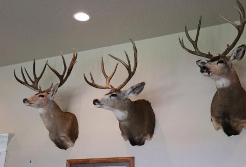 美國獵人收藏品23