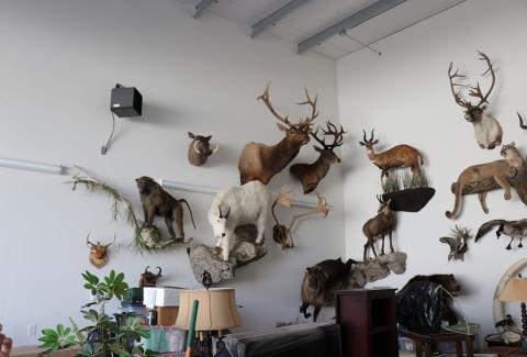 美國獵人收藏品4