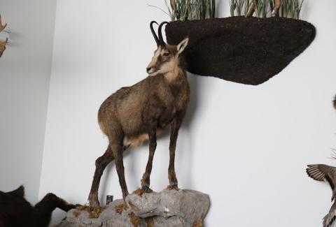美國獵人收藏品16