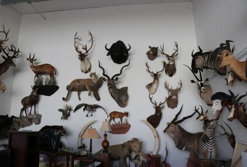 美國獵人收藏品1
