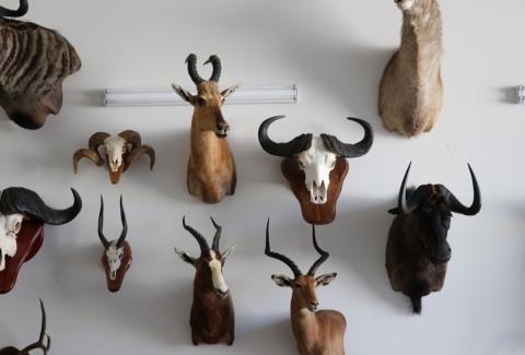 美國獵人收藏品21