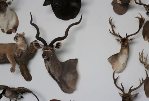 美國獵人收藏品17