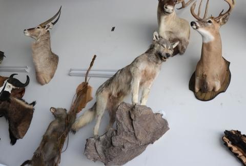 美國獵人收藏品5
