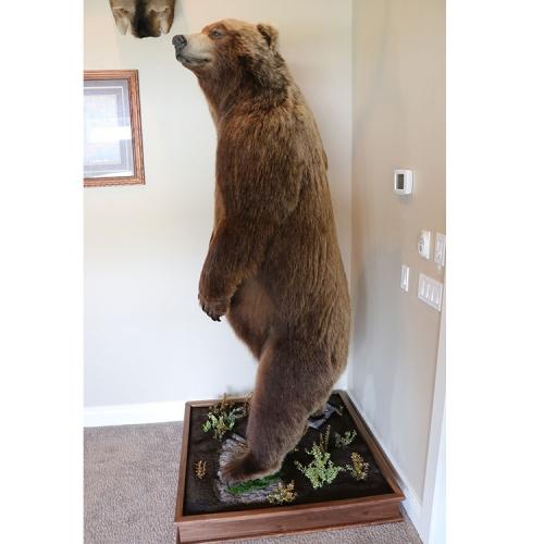 棕熊站姿2